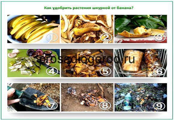 применение банановой кожуры в огороде