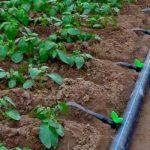 система капельного полива на огороде своими руками