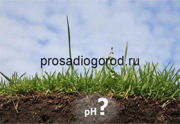 почему зеленеет земля в огороде