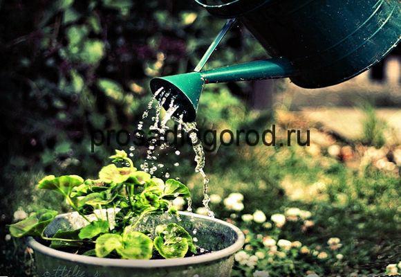 как правильно поливать огород