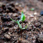 торф для огорода польза и вред