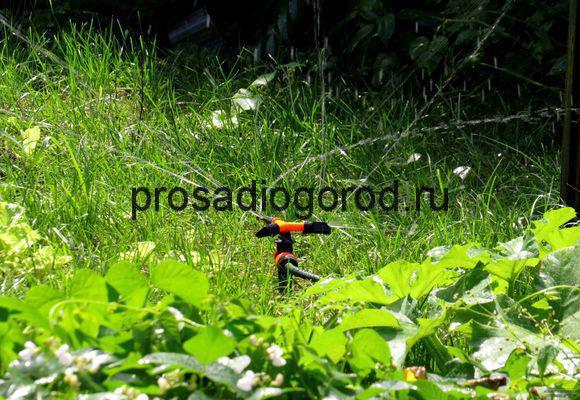 полив огорода дождеванием