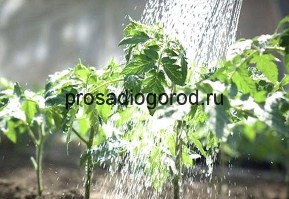 вода для полива огорода
