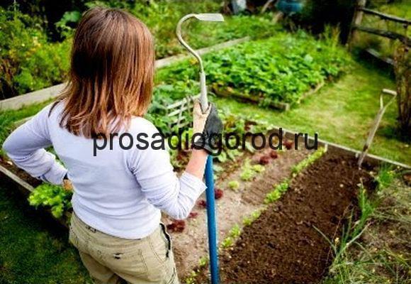 весенние работы на огороде