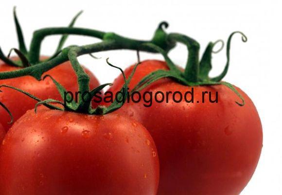 помидоры красная шапочка описание сорта