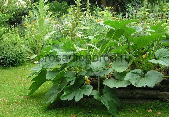 тенелюбивые растения для огорода