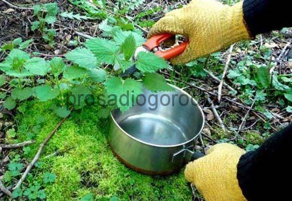 крапива как удобрение для огорода