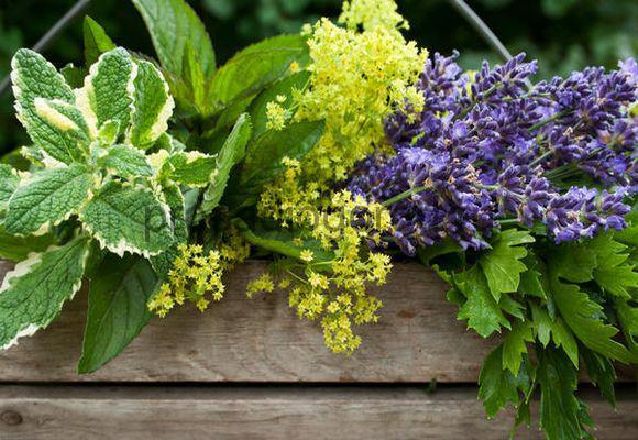 полезные растения на огороде
