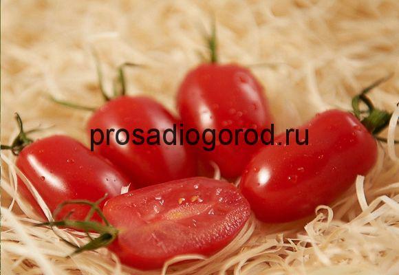 помидоры сорта дамские пальчики