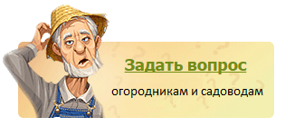 Задать вопрос