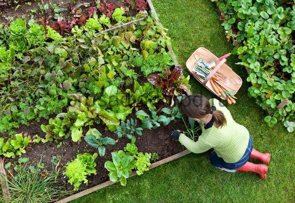 Що посадити на городі
