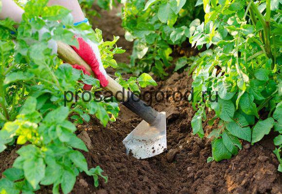 тяпка для огорода своими руками