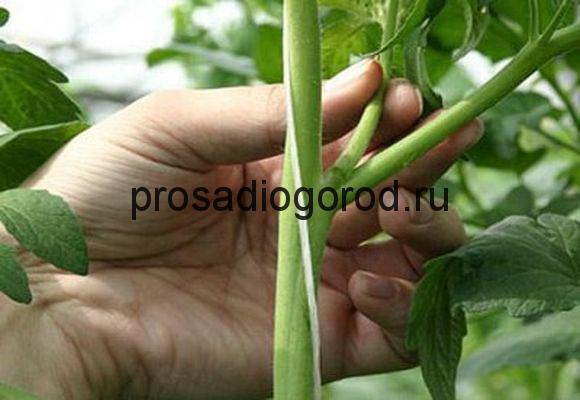как формировать помидоры в открытом грунте
