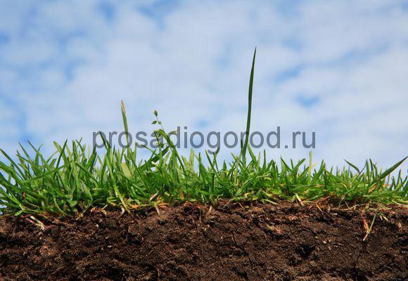 обеззараживание почвы на огороде