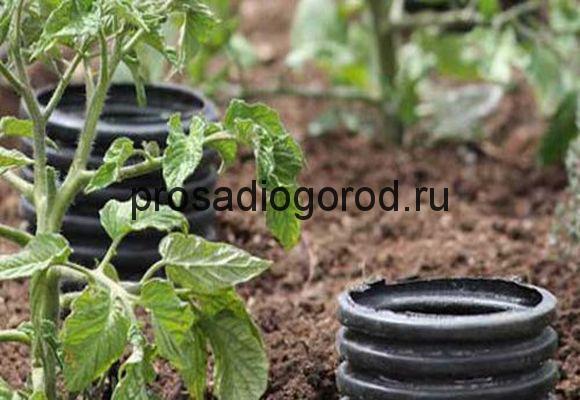 полив томатов из бутылок