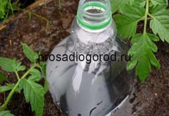 капельный полив помидор из бутылок