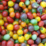 помидоры черри сорта