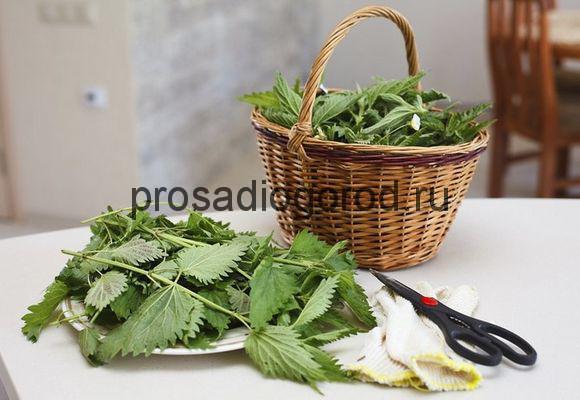 удобрение из травы крапивы