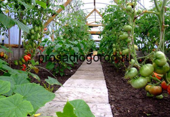 уход за помидорами в теплице из поликарбоната