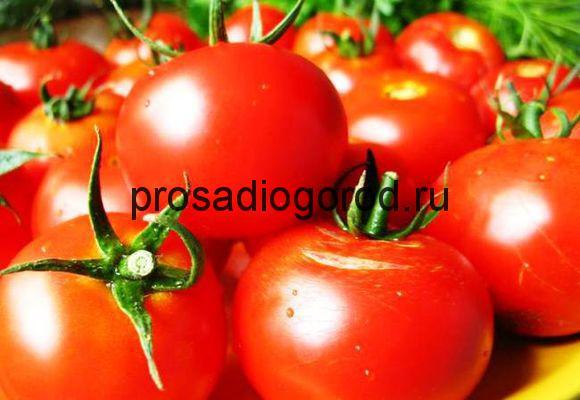лучшие сорта помидоров для теплиц