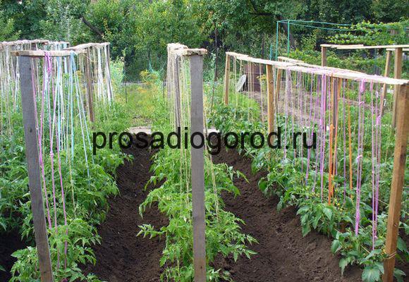 как правильно подвязывать томаты