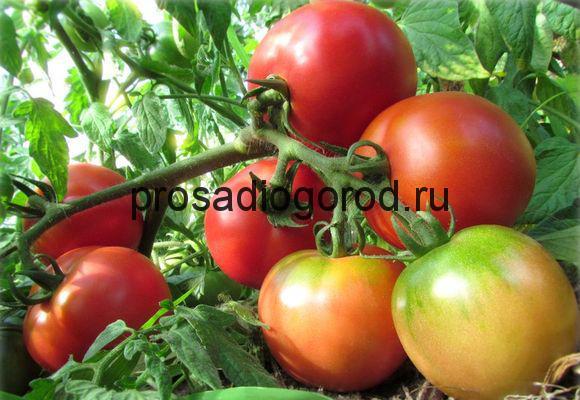 томат ляна розовая