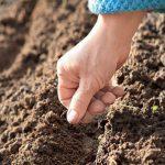 семена моркови для посадки