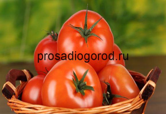 хороший урожай помидор