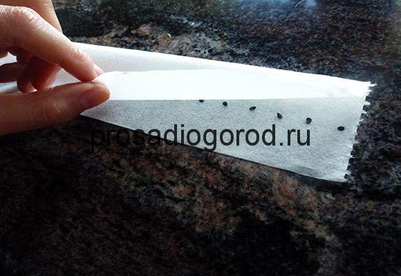 редис на туалетной бумаге