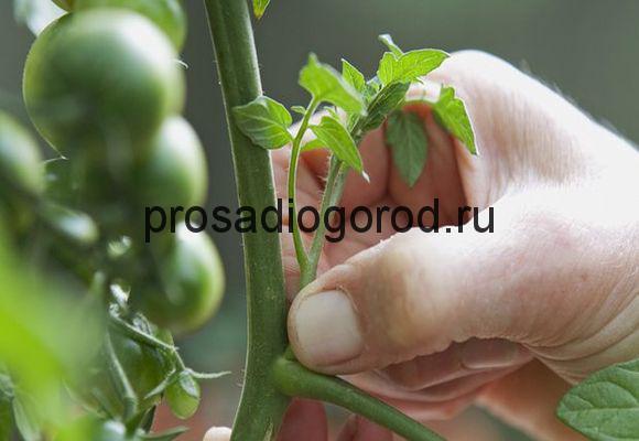 прищипывание помидоров