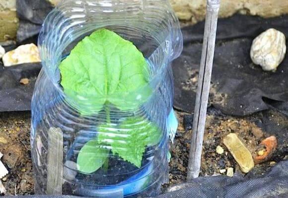 огурцы в пластиковой бутылке