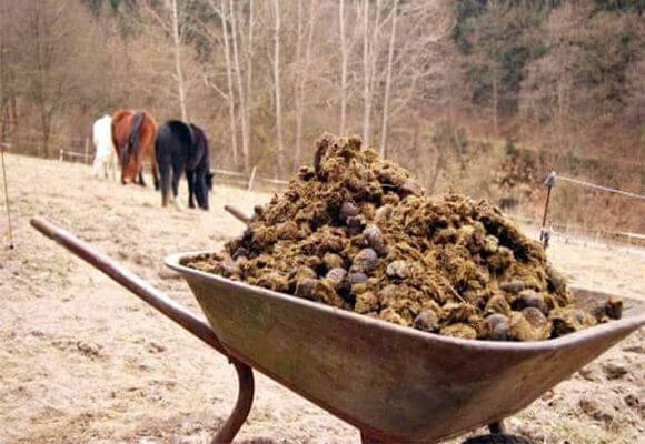 Конский навоз как удобрение — как применять на своем участке для увеличения урожая