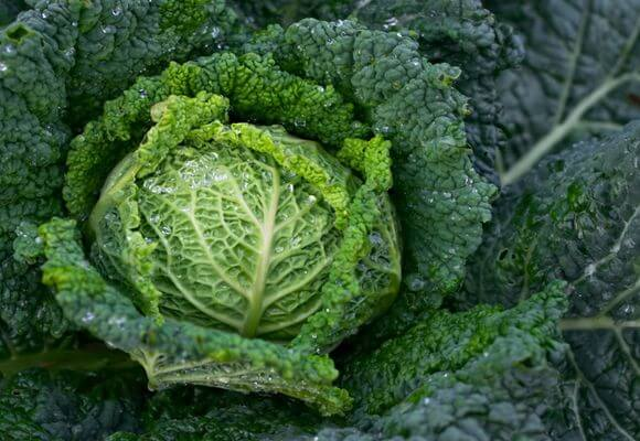 кольраби овощ фото