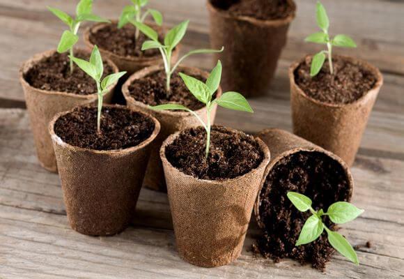 выращивание рассады в торфяных горшках