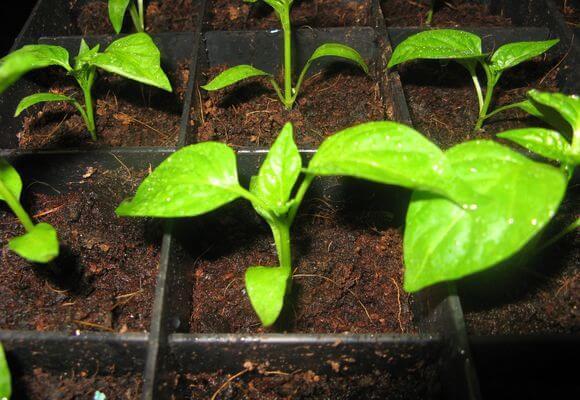 подготовка грунта для выращивания