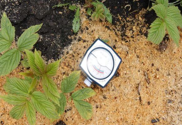 кислотность грунта для малинника