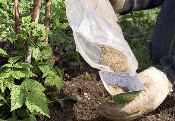 удобрение для малины