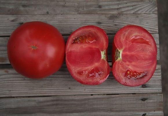 томаты в разрезе