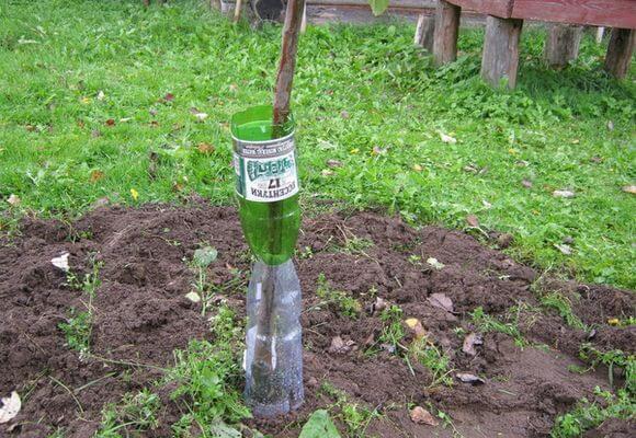 Утепление яблони при помощи пластиковых бутылок