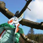 обрезка фруктового дерева