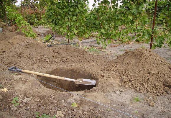 Яма для посадки груши