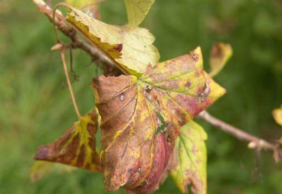 засохшие листья
