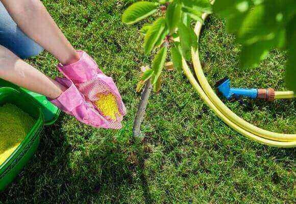 подсыпает удобрение под дерево