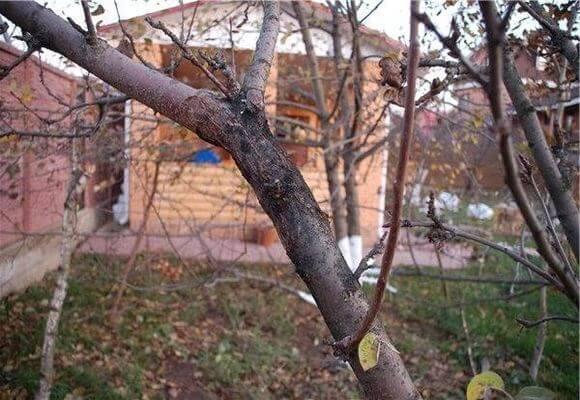 черный налет на дереве