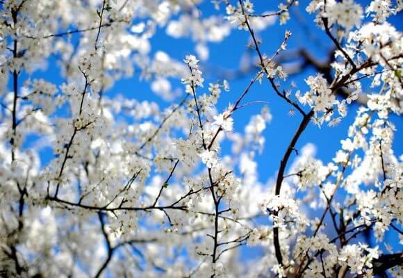 апрель месяц