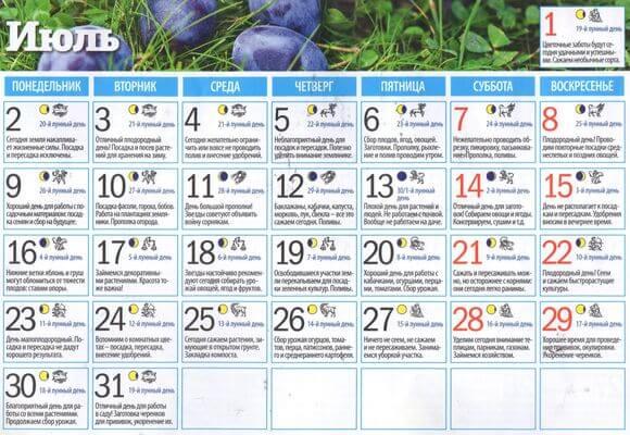 календарь работ в июле 2018