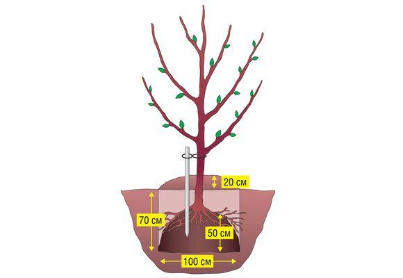 Правила высадки дерева