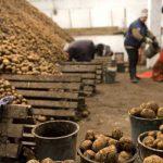 картофель на складе