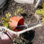 корневая подкормка кустов