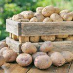 ящик картошки